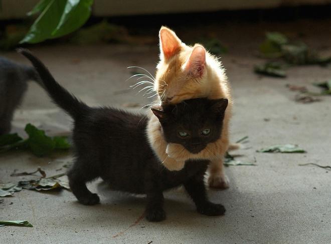 Sưởi ấm trái tim với những cái ôm ngọt ngào của động vật Huggin13
