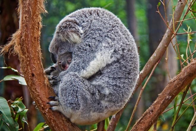 Sưởi ấm trái tim với những cái ôm ngọt ngào của động vật Huggin14