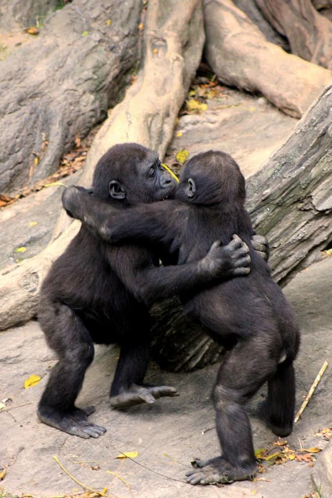Sưởi ấm trái tim với những cái ôm ngọt ngào của động vật Huggin15