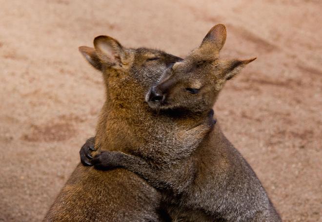 Sưởi ấm trái tim với những cái ôm ngọt ngào của động vật Huggin16