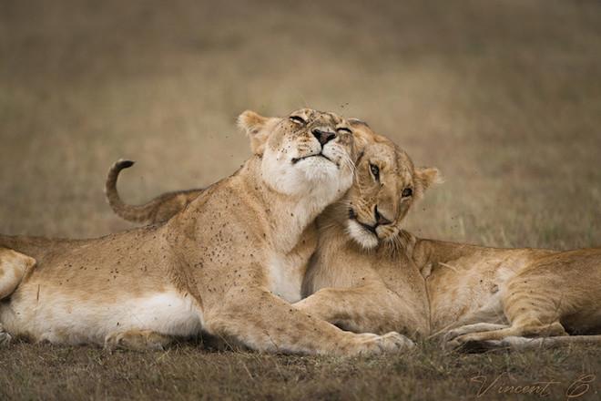Sưởi ấm trái tim với những cái ôm ngọt ngào của động vật Huggin17