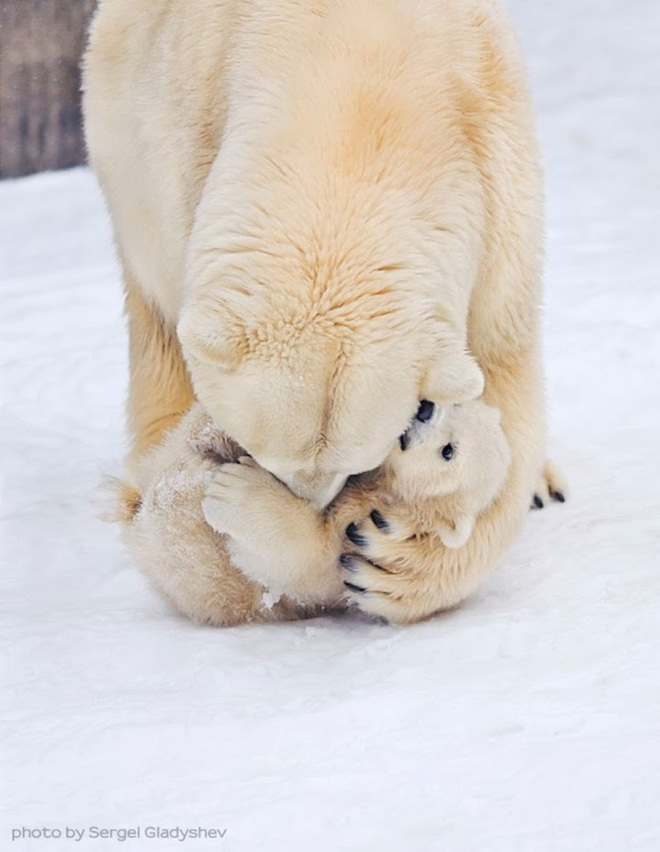 Sưởi ấm trái tim với những cái ôm ngọt ngào của động vật Huggin20