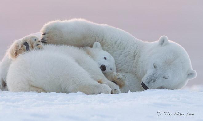 Sưởi ấm trái tim với những cái ôm ngọt ngào của động vật Huggin21