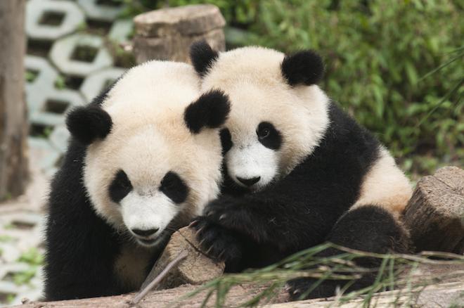 Sưởi ấm trái tim với những cái ôm ngọt ngào của động vật Huggin23