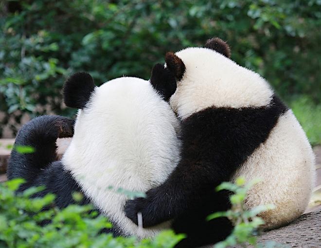 Sưởi ấm trái tim với những cái ôm ngọt ngào của động vật Huggin24