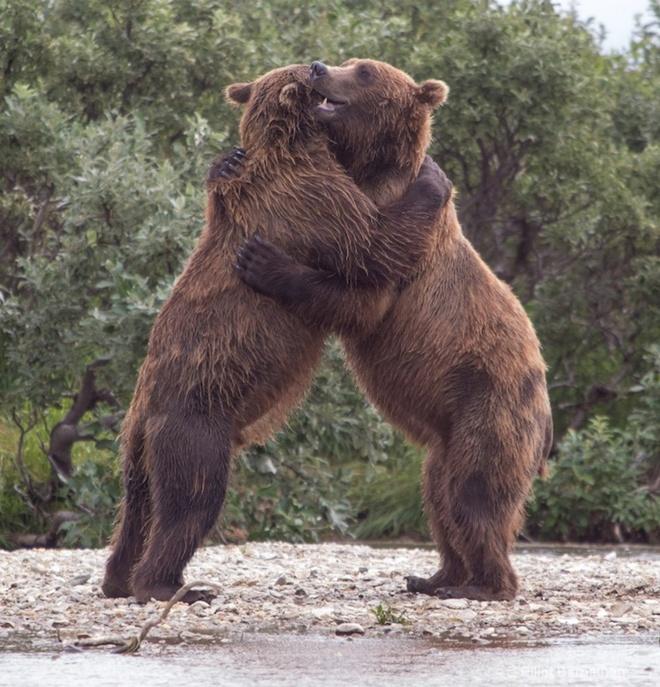 Sưởi ấm trái tim với những cái ôm ngọt ngào của động vật Huggin25