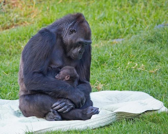 Sưởi ấm trái tim với những cái ôm ngọt ngào của động vật Huggin26