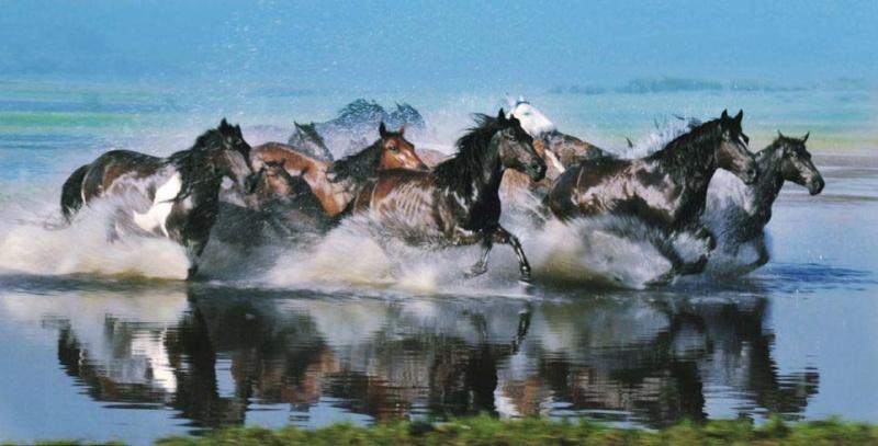 Ngựa phi trên thảo nguyên Mông Cổ  Ng210