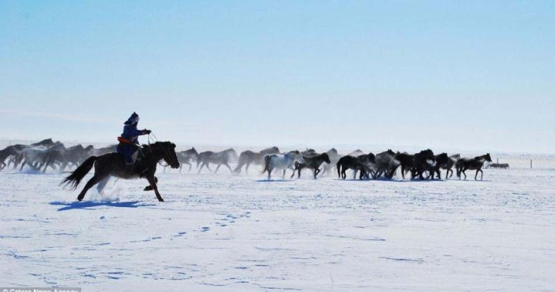 Ngựa phi trên thảo nguyên Mông Cổ  Ng410