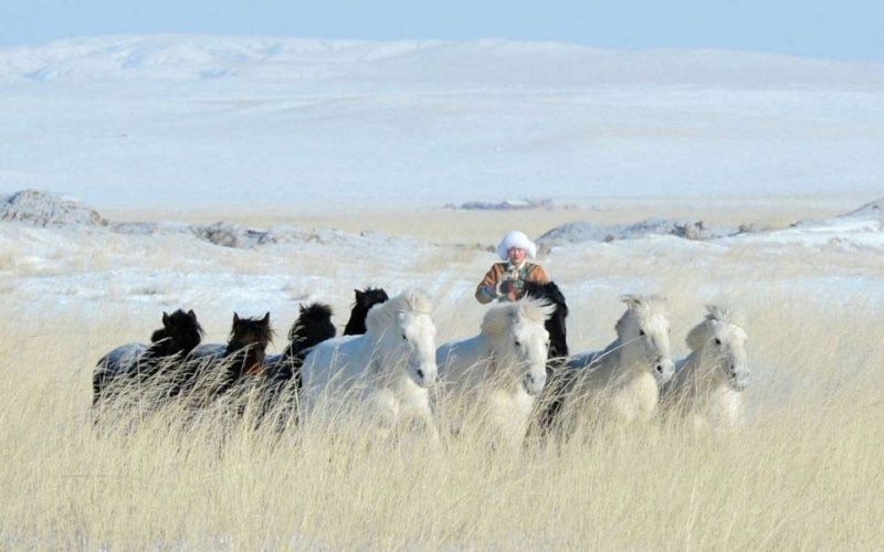 Ngựa phi trên thảo nguyên Mông Cổ  Ng510