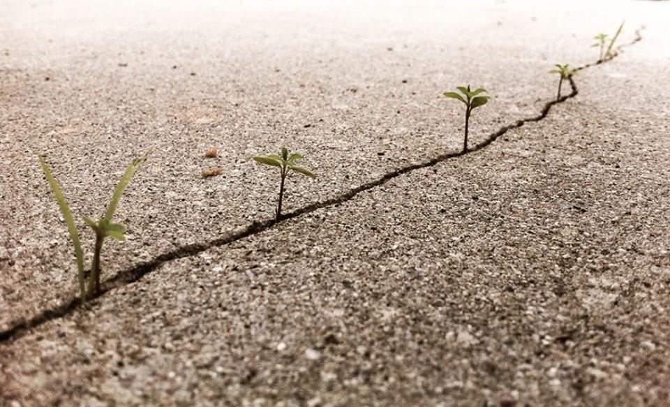 Triết lý sống từ những cái cây không khuất phục  Triet-10