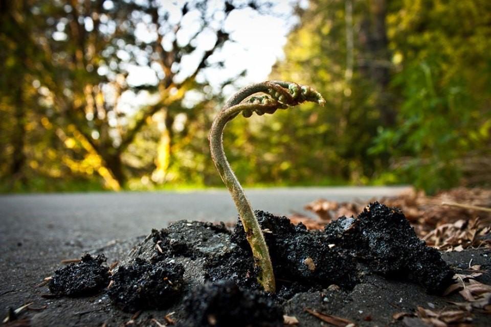Triết lý sống từ những cái cây không khuất phục  Triet-14