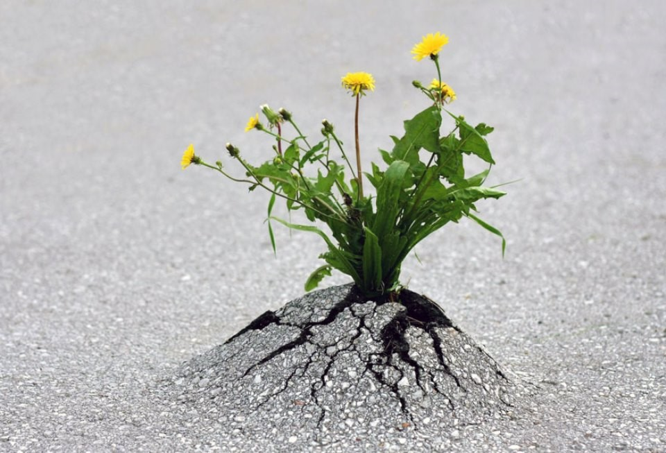 Triết lý sống từ những cái cây không khuất phục  Triet-16