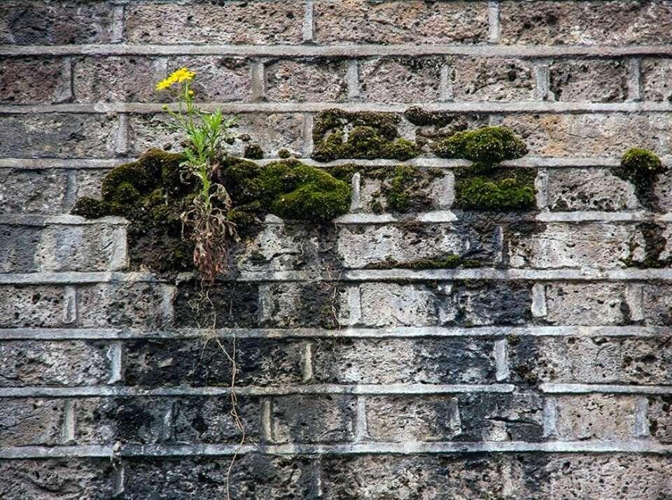 Triết lý sống từ những cái cây không khuất phục  Triet-18