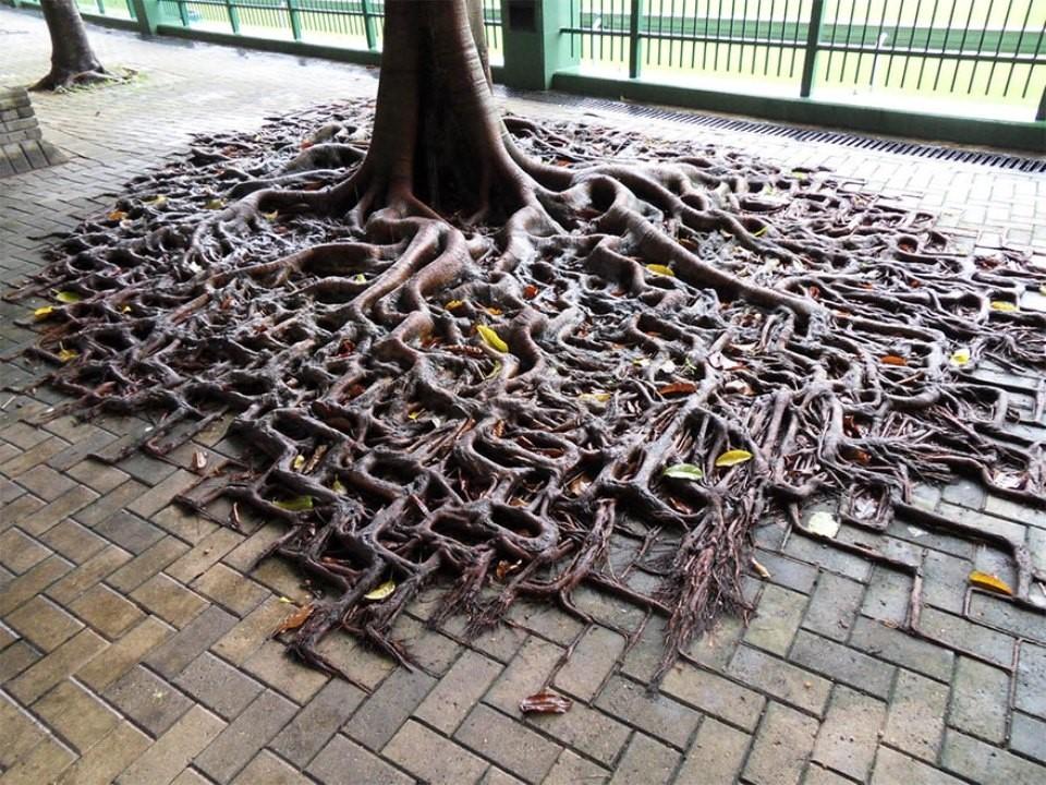 Triết lý sống từ những cái cây không khuất phục  Triet-20