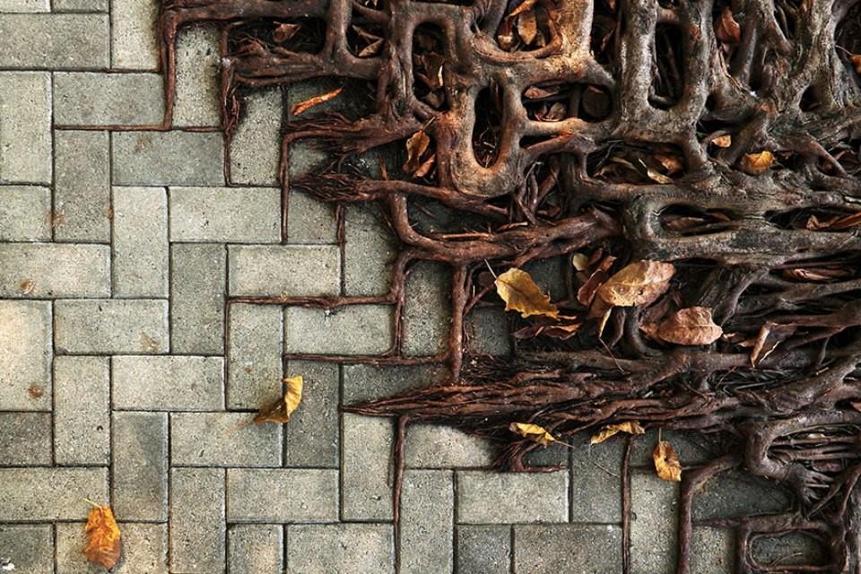 Triết lý sống từ những cái cây không khuất phục  Triet-21