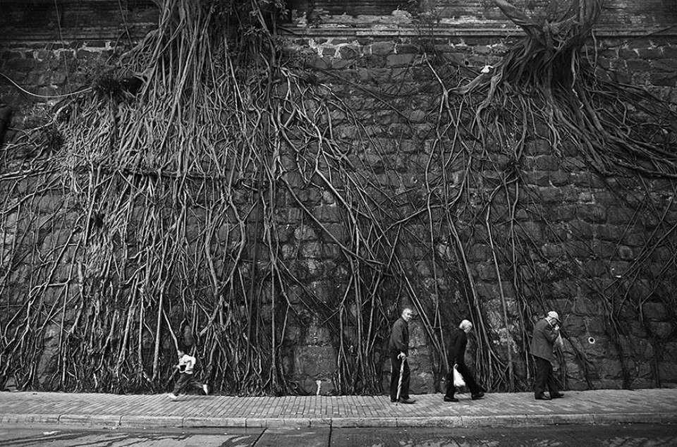 Triết lý sống từ những cái cây không khuất phục  Triet-22