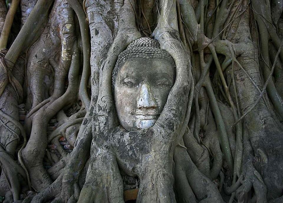 Triết lý sống từ những cái cây không khuất phục  Triet-23