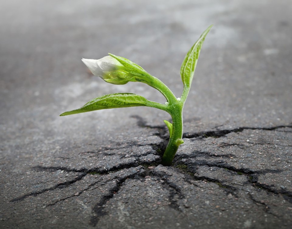 Triết lý sống từ những cái cây không khuất phục  Triet-24