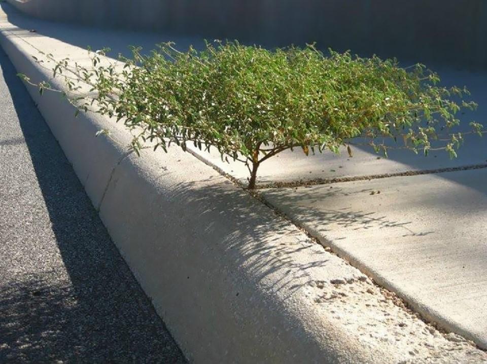 Triết lý sống từ những cái cây không khuất phục  Triet-31
