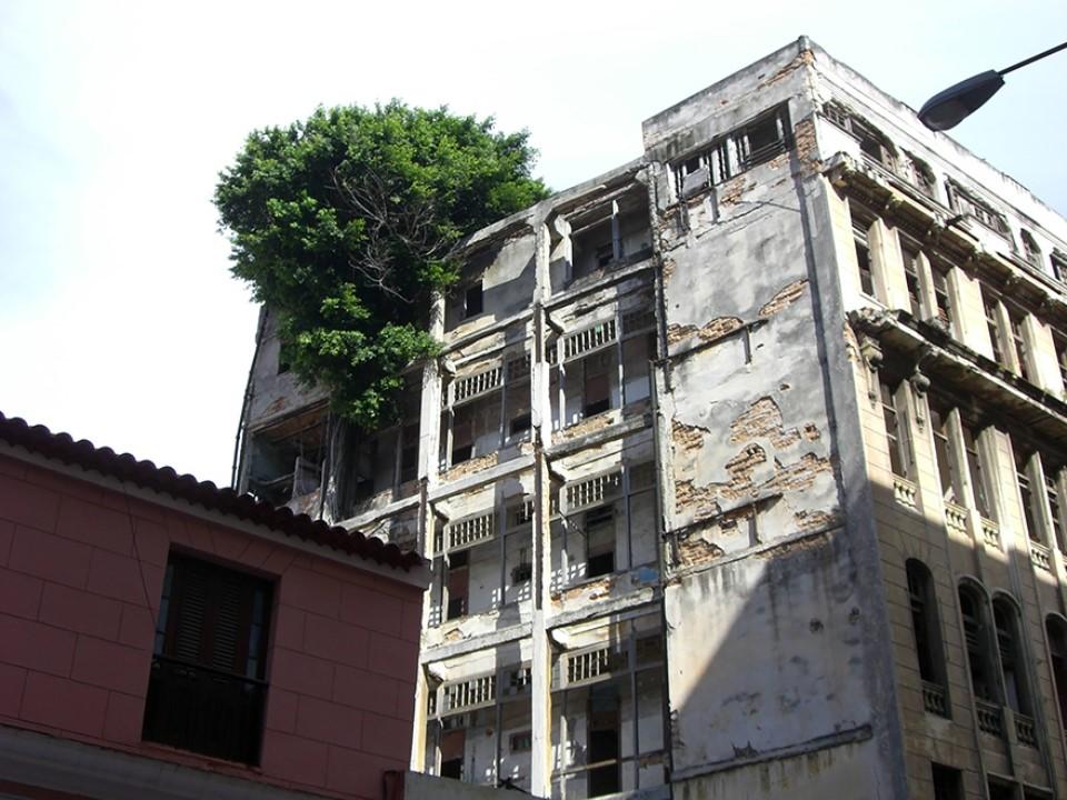 Triết lý sống từ những cái cây không khuất phục  Triet-35