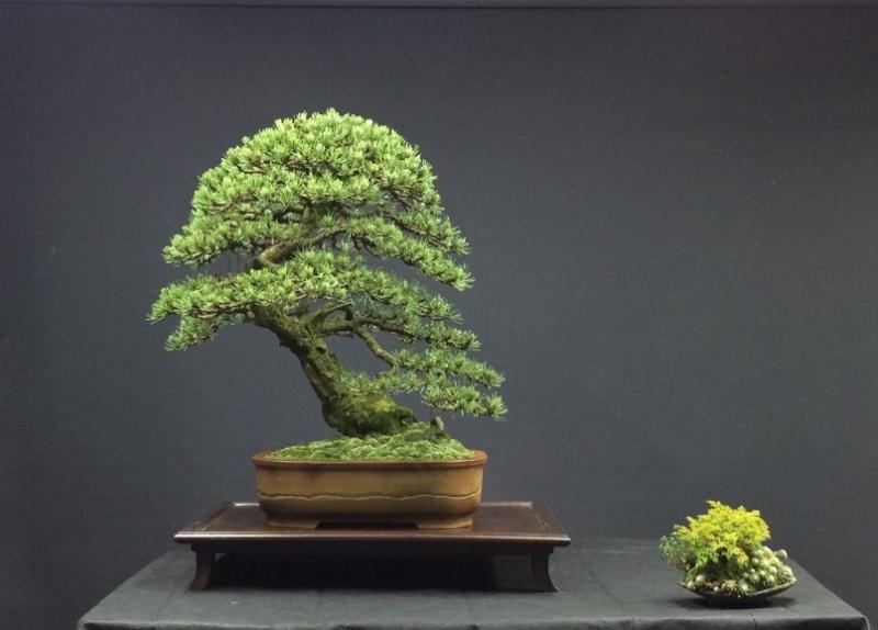 Pinus mugo 2004 - Page 4 Photo_12