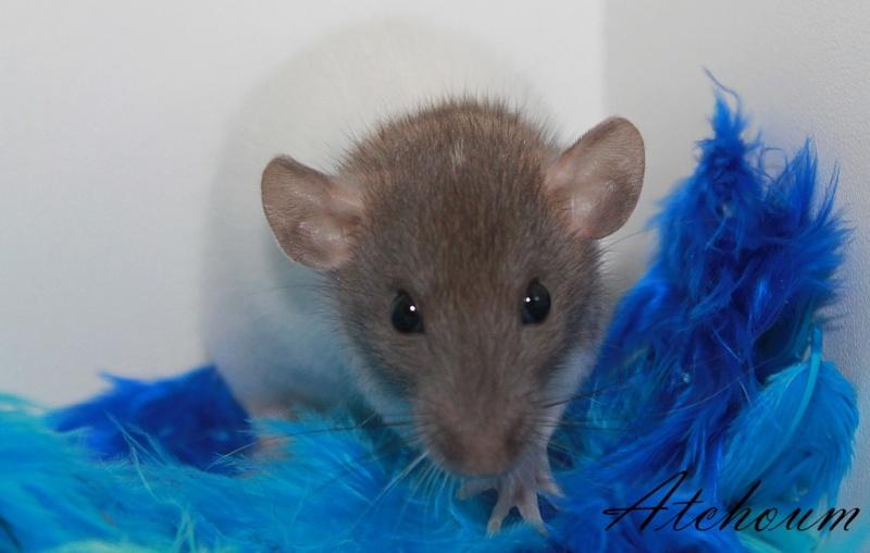Cherche à adopter deux rats Img_8023