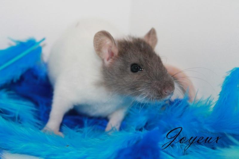 Cherche à adopter deux rats Img_8024