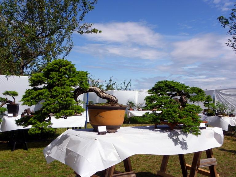 Campbell River Bonsai Club 5th Annual Show Crbc2011