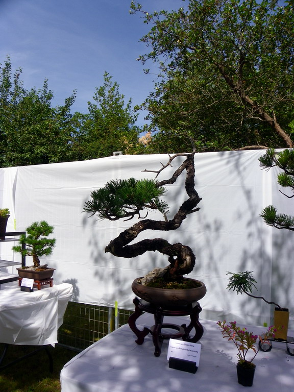 Campbell River Bonsai Club 5th Annual Show Crbc_216