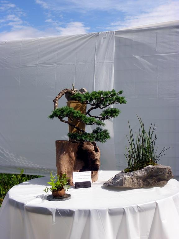 Campbell River Bonsai Club 5th Annual Show Crbc_217
