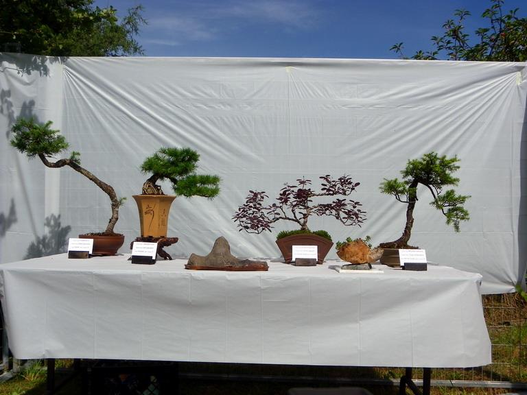 Campbell River Bonsai Club 5th Annual Show Crbc_220