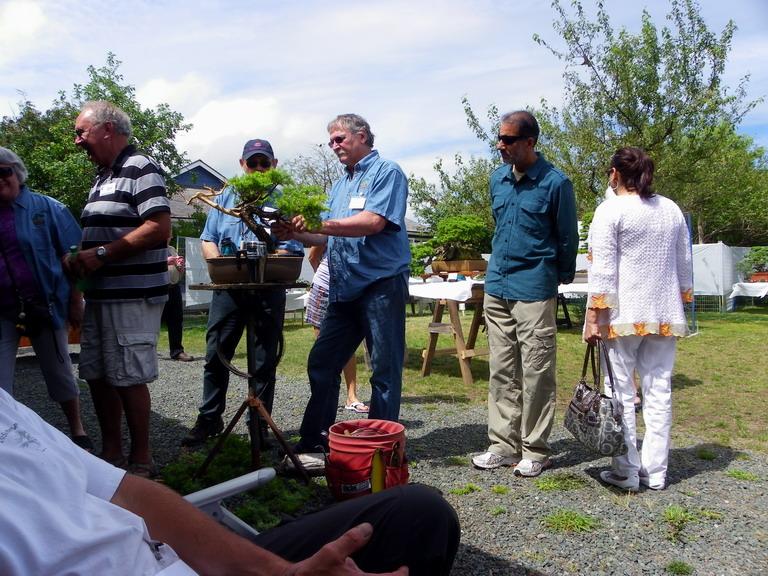 Campbell River Bonsai Club 5th Annual Show Crbc_224