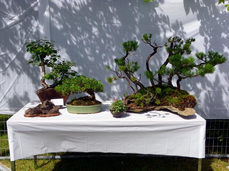 Campbell River Bonsai Club 5th Annual Show Crbc_225