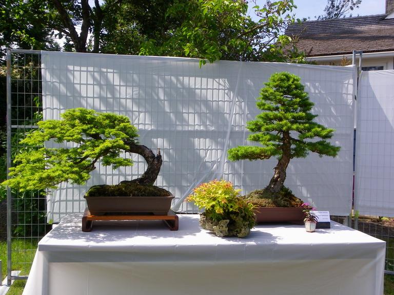 Campbell River Bonsai Club 5th Annual Show Hwandh11
