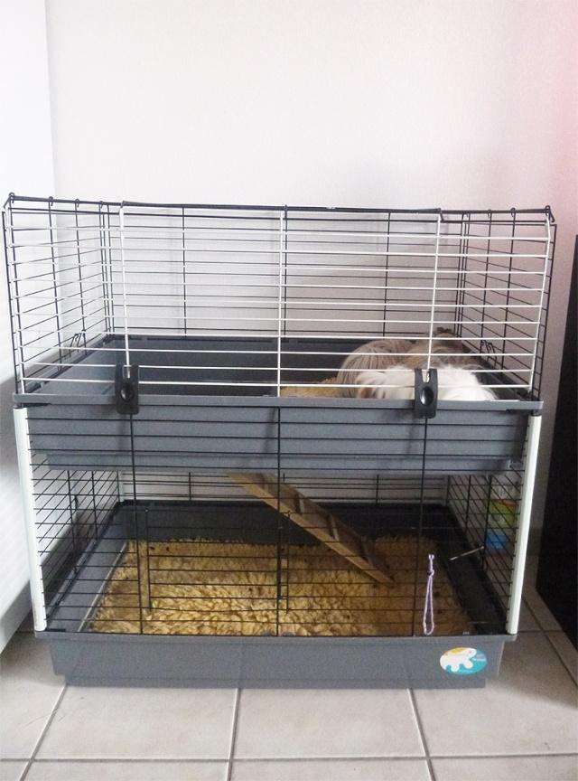 (34) Vend cage double Ferplast avec drybeds inclus P1060215