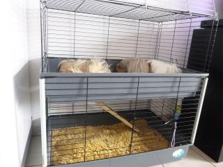 (34) Vend cage double Ferplast avec drybeds inclus P1060216