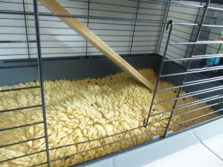 (34) Vend cage double Ferplast avec drybeds inclus P1060217