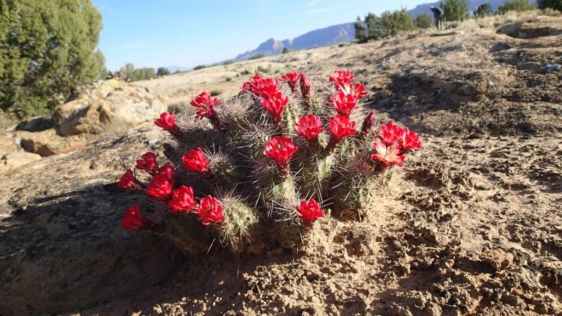 New Mexico - Colorado - Utah - Arizona - Kurts Reisebericht nach Nordamerika 2014 P5030410