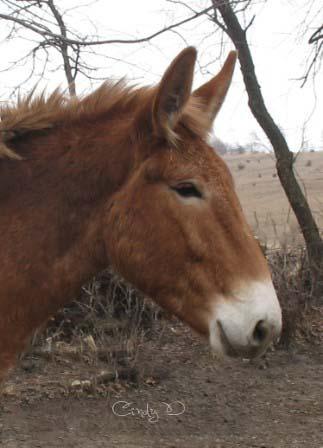 Biscotte ma tête de mule ! Jeanni12