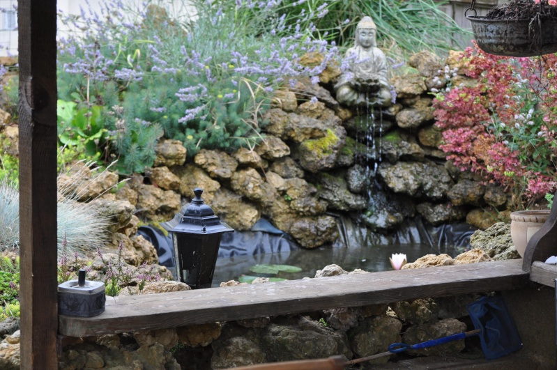 Photos de mon bassin Dsc_1613
