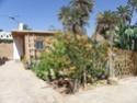 """Oasis de Tighmert     Région de Guelmim     Maison d'hôtes """" Les Nomades"""" Imgp9424"""