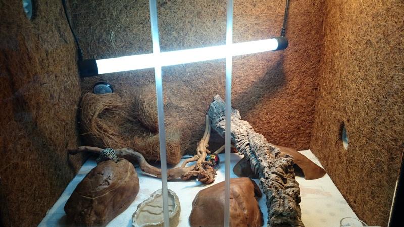 gecko léopard abîmé  - Page 2 Dsc_0018