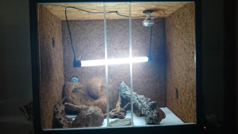 gecko léopard abîmé  - Page 2 Dsc_0019