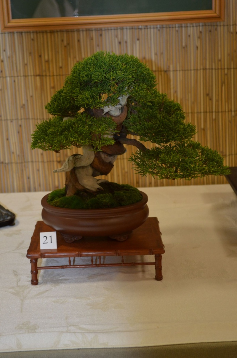 Carolina Bonsai Expo 2014 Dsc_0014