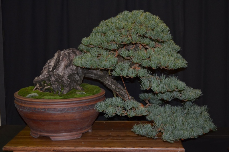 Carolina Bonsai Expo 2014 Dsc_0016