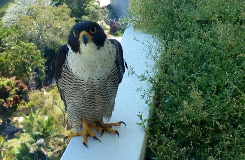 Robyn Hills Falcons 2013 tot en met 2020 - Pagina 3 10104810