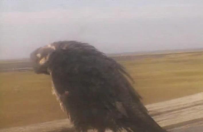 Xcel Energy Falcon Cam, Minnesota: 2014 2014-114
