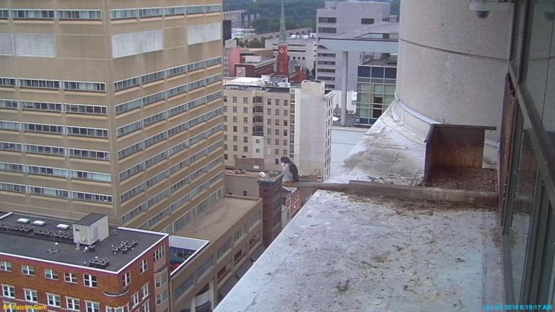 Harrisburg, Pennsylvania: Niecey(b/g, 48/AE) & Lil' Dad(b/r, *W/*V) 2014 - Pagina 8 Still_16