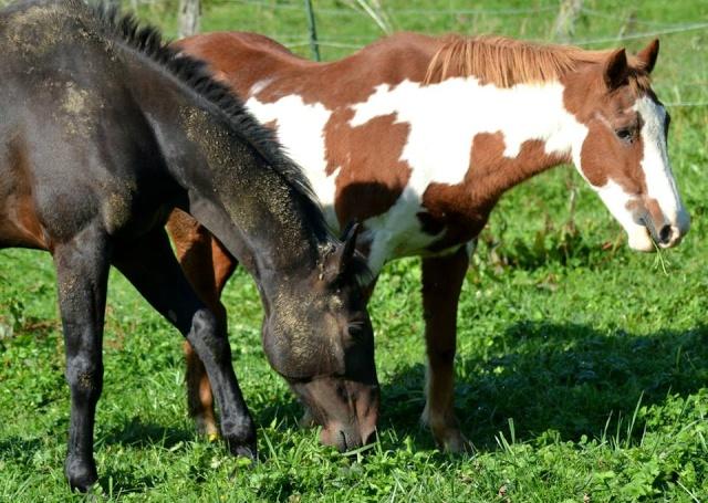 WALANIE (VANILLE) - ONC poney - adoptée en avril 2011 par voulk  - Page 6 10711510